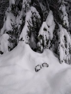 A New Years Delight: Snowshoeing and Snowcamping in Gifford-Pinchot National Forest